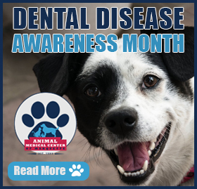 It\'s Animal Dental Disease Month at Animal Medical Center