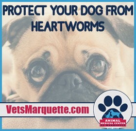 Learn More About Heartworm With Animal Medical Center