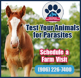Learn More About Parasite Testing For Your Pets