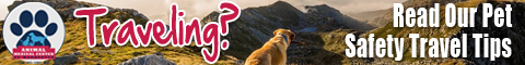 Learn How to Safely Travel With Your Pet