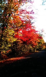 Marquette Area Trees Have Turned Rich Colors